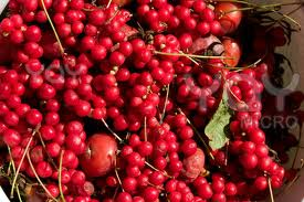 Schizandra is a powerful adaptogen for whole body health