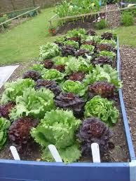 veg_garden
